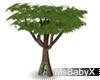 [X]Redwood Tree