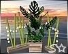 S* CHIC Lit Plants