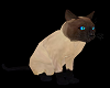 Siamese Cat Pet M/F