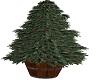 Christmas tree/bucket
