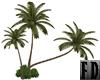 Palms Plants Cluster