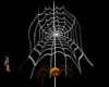Web and Orange Spider