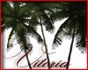 V! Palm Trees (4)