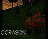 .:C:. Roses plant