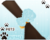 [Pets]Kimi | wirst roses