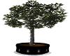 Blk Base Ficus  w/Lights