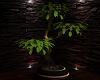 winter nights plant 2