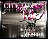 ~F~City Lux Orchids Sp.R