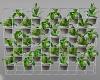 plant hydropinie