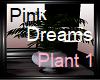 Pink Dreams Plant 1