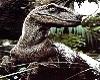 Raptor+Rex Sounds