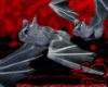 Vampire Bat pet