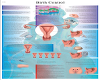 LUVI BIRTH CONTROL CHART