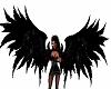 Cool Black Wings