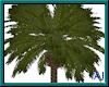 (A) Sunrise Palm