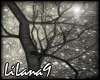 *LL*  Tree enhancer 3