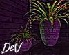 !D Duo Plants