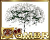 QMBR Tree White Rose