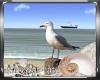 Summer Seagull
