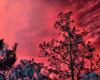 Flame Tree STKR