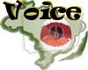 (PN) Voice2