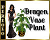 Dragon Vase Plant
