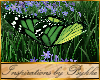 I~Meadow Butterflies