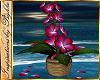 I~Island Plumaria Plant