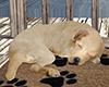 💀 | Yard Pup