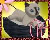 WF>Siamese Kitten
