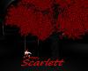 Scar! DarkSwingTree