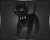 🖤 Black Cat Hold Avi
