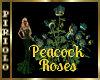 Peacock Roses