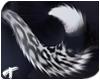 Silva | Tail 5