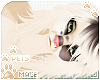 [Pets] Fudge | Naxos