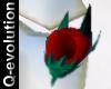 [8Q] Lapel  Rose