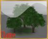 3 large elm trees