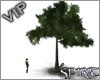 *S* Town tree