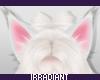 Neko | Ears White