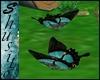 """"""".Flying Butterfly.""""Turk"""