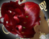 WF>Misha~Ruby Red