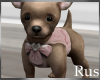 Rus Princess Puppy