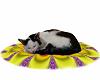 Sleeping Cat Tara <3 2