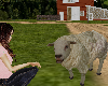 Realistic Sheep animated