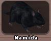 N | Black pet rats
