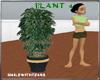 indoor plant 4