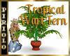 Tropical Wart Fern