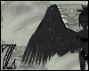 harpy wings (Celaeno)