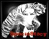 White Tiger Hug