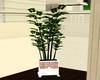 Malibu Corner Plant